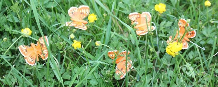 Schmetterlinge, Vögel und weitere Begleiter durch den Sommer