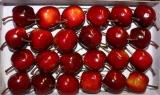 24 Deko Apfel Rot glanz 3 cm am Draht