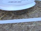 Deko Stoffband Weiß